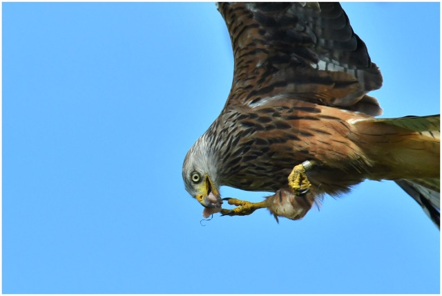 eating on the wing