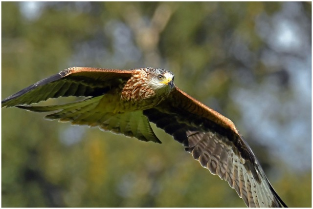 kite in flight close