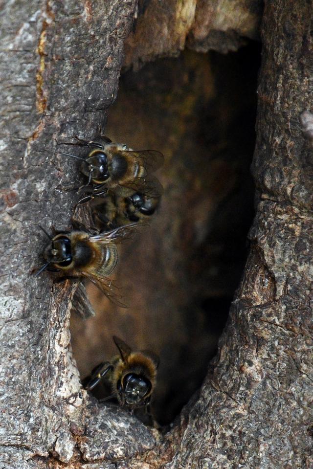 Bees Nest 1