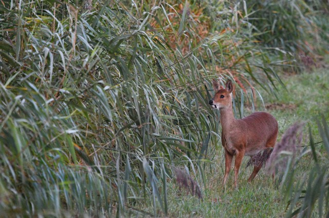 CWD Early morning 8