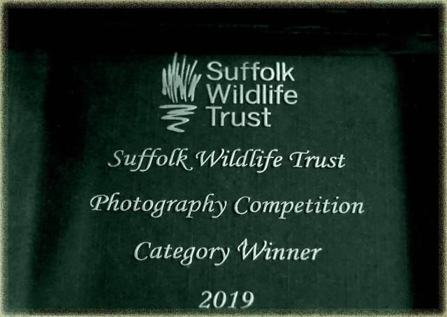 SWT Award 2019